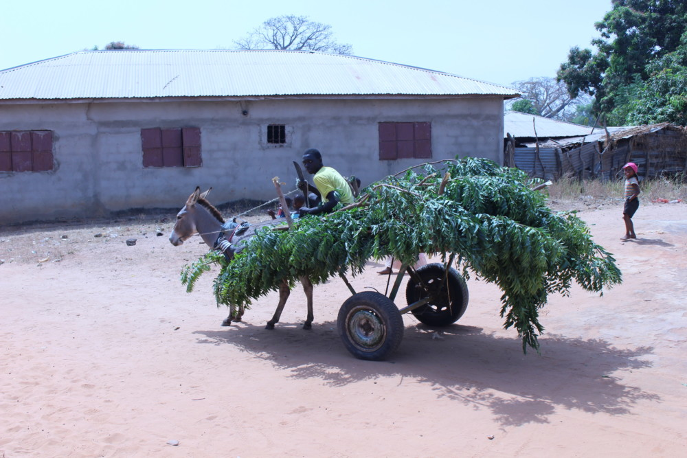 Juffureh, Gambia