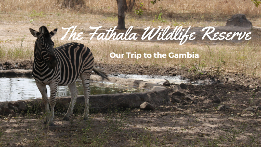 The Fathala Wildlife Reserve, Our Trip to the Gambia, Senegal