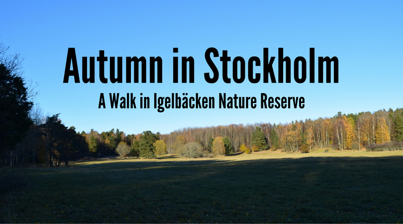 Autumn in Stockholm: A Walk in Igelbäcken Nature Reserve