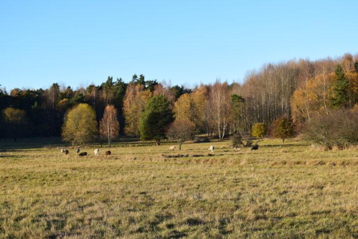 Igelbäcken Nature Reserve, Igelbäckens naturreservat, Stockholm, Sweden, Sverige