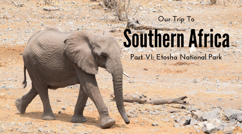 Etosha National Park, Namibia, Elephants, Safari