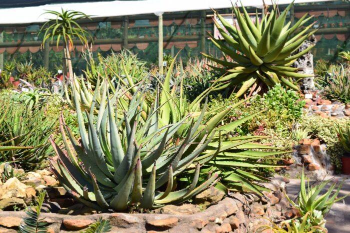 Rooiklip Nursery, Aan De Bergen Guest House, Swellendam, South Africa
