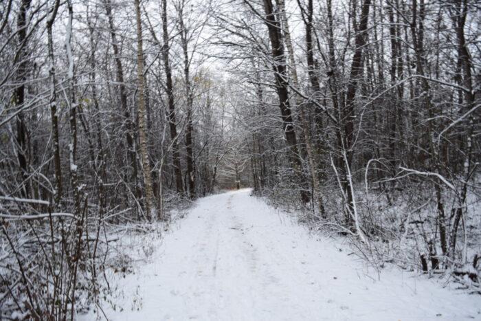 Igelbäcken Nature Reserve, Kista, Stockholm, Winter, Snow, Sweden