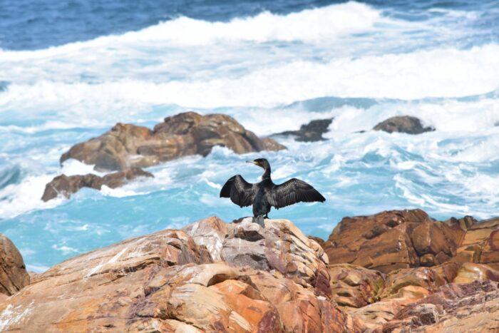 Mossel Bay, Mosselbaai, South Africa