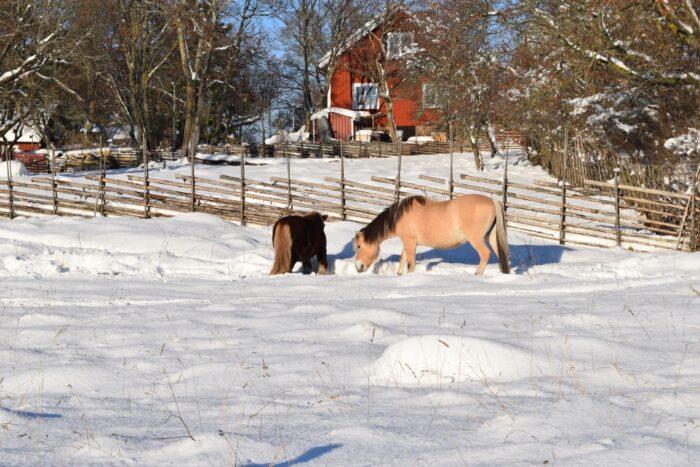 Hästar, Horses, Snow Storm, Akalla By, Stockholm, Sweden, Snö. Sverige