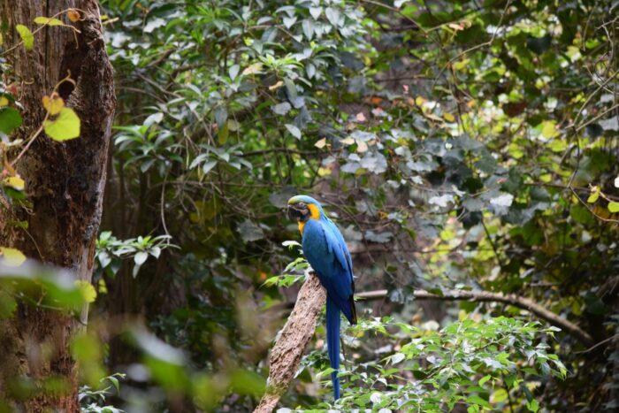 Bird Sanctuary, Aviary, Birds of Eden, Plettenberg Bay, South Africa