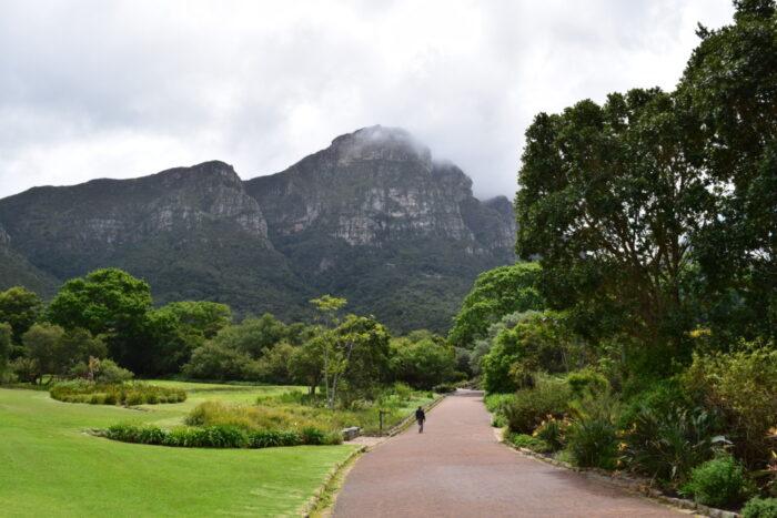 Kaapstad, Suid-Afrika, Nasionale Botaniese Tuine, Kirstenbosch Botanical Garden, Cape Town, South Africa