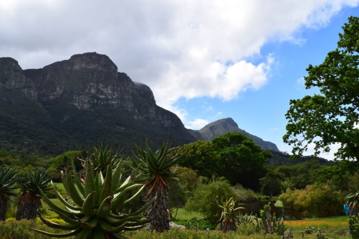 Kirstenbosch botaniske hage, Kappstaden, Sør-Afrika, Table Mountains