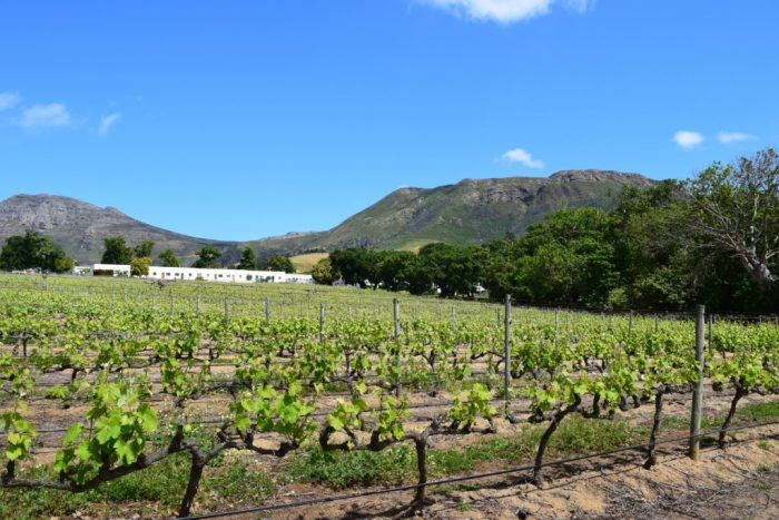 Wine Tasting, Groot Constantia, Cape Town, South Africa
