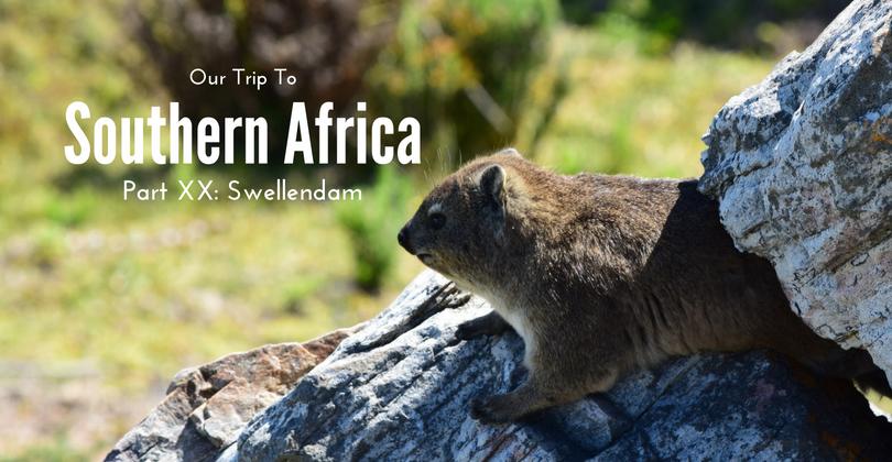 Swellendam, Hermanus, Cape L'Agulhas, Rock hyrax, South Africa