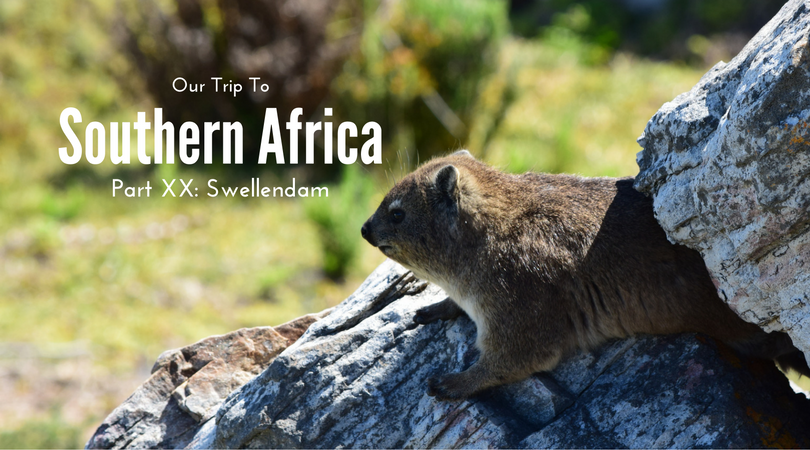 Swellendam, Hermanus, Cape L'Agulhas, Rock hyrax, South Africa
