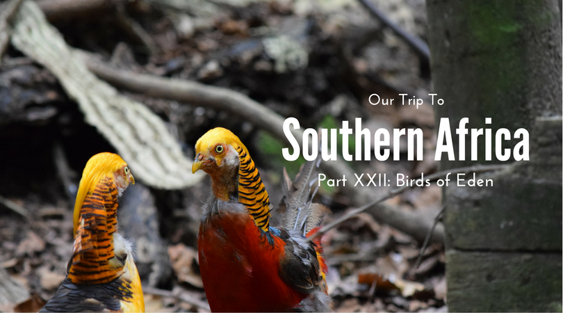 Southern Africa, Part XXII – Birds of Eden, South Africa