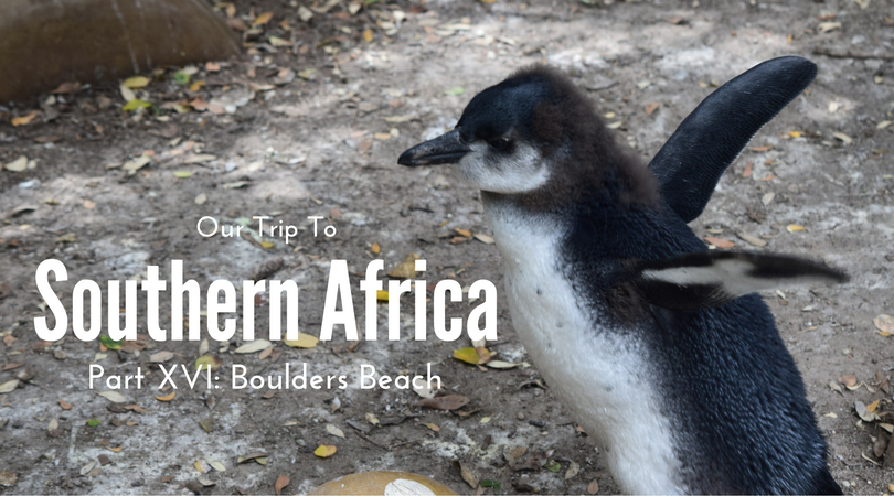 Southern Africa, Part XVI – Boulders Beach, South Africa