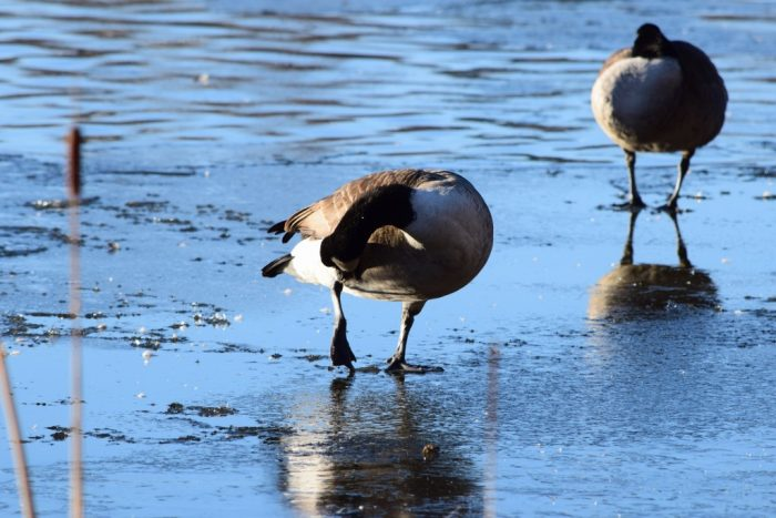 Birds, Råstasjön, Solna, Stockholm, Sweden
