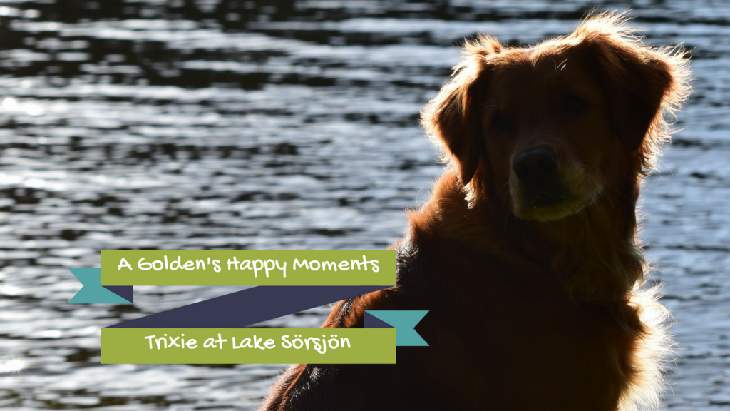 A Golden's Happy Moments – Trixie at Lake Sörsjön